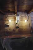 DCW éditions Lampe Gras N304 L40 wandlamp