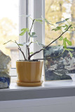 Hay Botanical Family bloempot XL