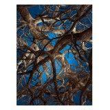 Moooi Carpets Liquid Maple vloerkleed 300x400 wol