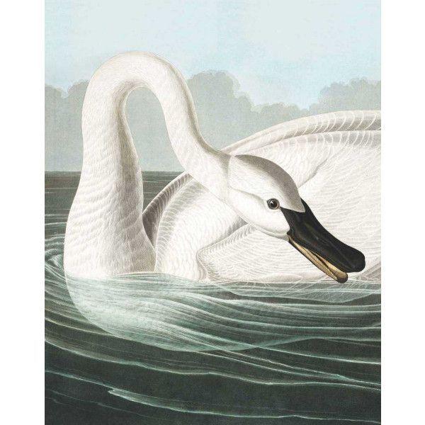 KEK Amsterdam Trumpeter Swan behangpaneel