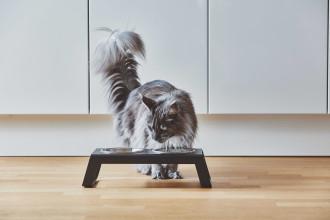 MiaCara Desco kattenvoerbak