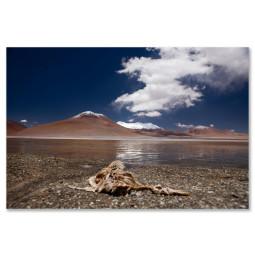 Get Art Flamingo muerto kunstfotografie 40x60