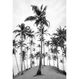 Get Art Palmbomen aan zee kunstfotografie