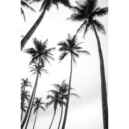 Get Art Palmbomen kunstfotografie