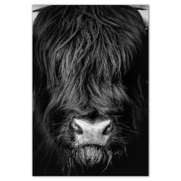 Get Art Schotse hooglander kunstfotografie