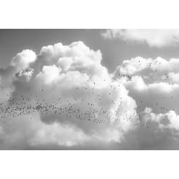 Get Art Vogels najaarstrek kunstfotografie