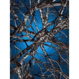 Moooi Carpets Liquid Birch vloerkleed 300x400
