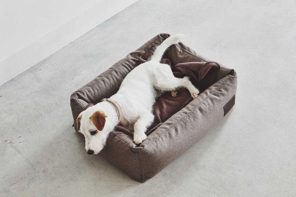 MiaCara Divo hondenmand small